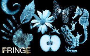 Fringe Novel #1: The Zodiac Paradox
