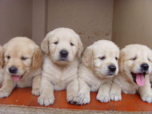 Students De-Stress With Puppies