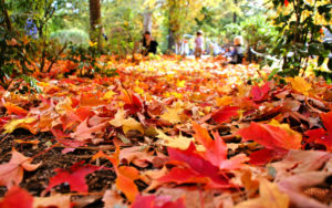 7 Ways to Make the Most of Autumn